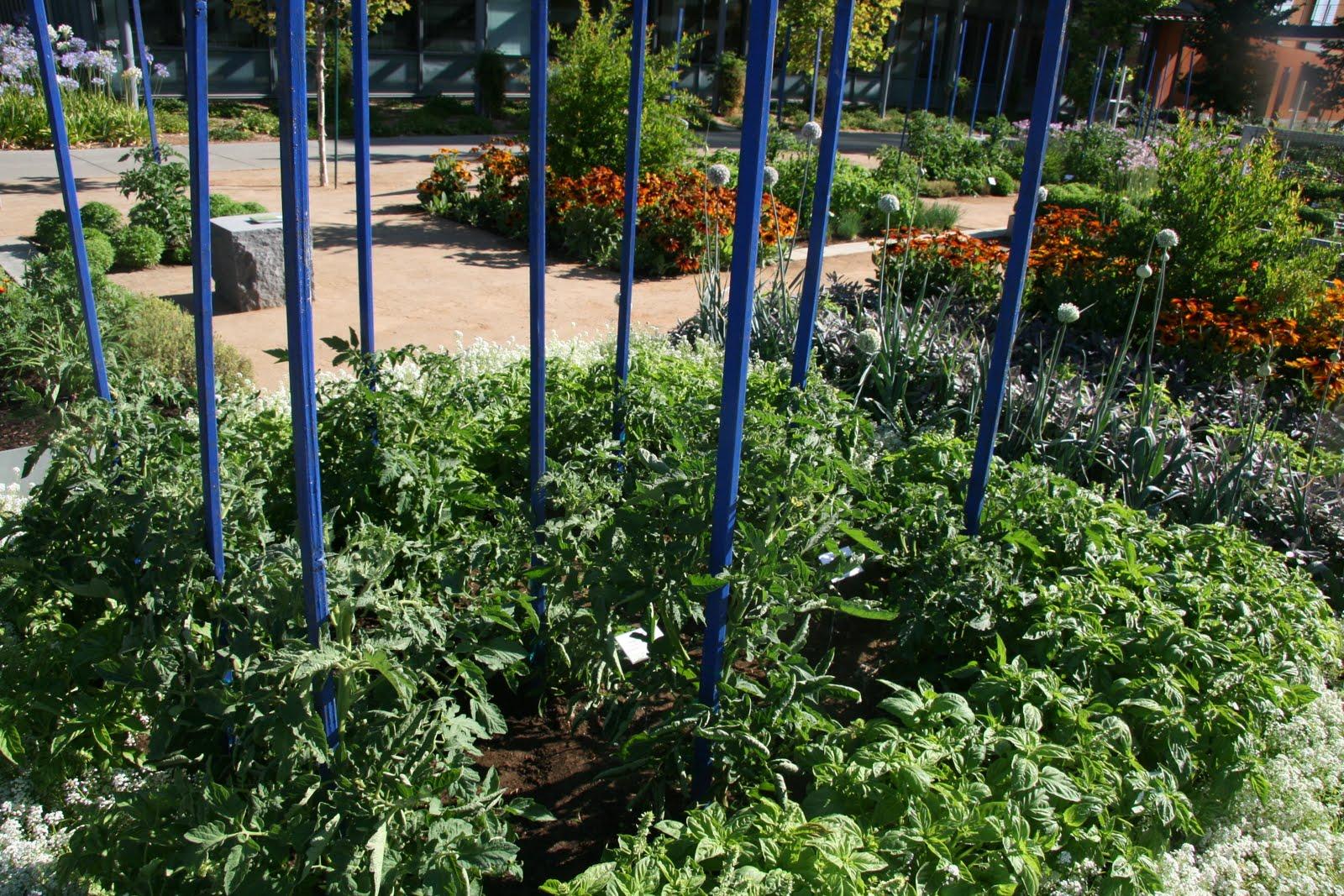 The Different Types Of Tomato Trellis My Garden Trellis