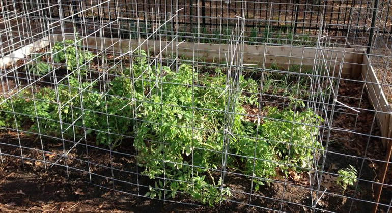 The Different Types Of Tomato Trellis My Garden Trellis